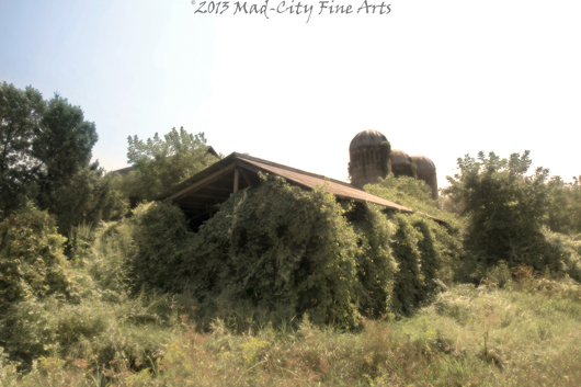 A barn near Portage, WI is taken back by nature.